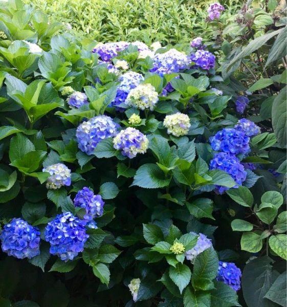 Garden-5